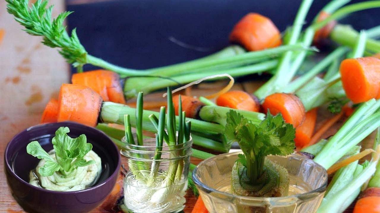 Best Vegetables to Grow from Scraps