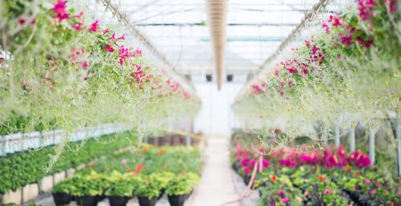 Greenhouse to Garden Vaughan Garden Centre Opening