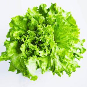 Green Leaf Lettuce Greenhouse to Garden