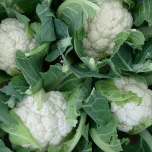 Cauliflower_Greenhousetogarden