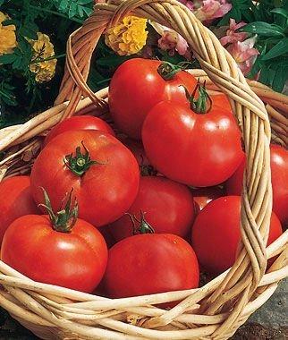 Early Girl Tomatos - Greenhouse to Garden