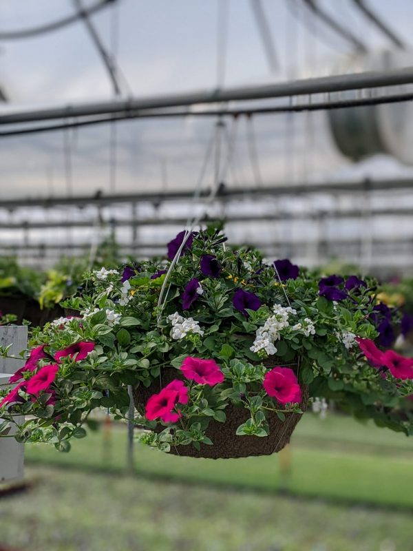Petunia Mix Hanging Basket
