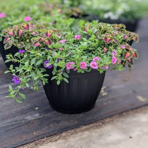 Coleus Wave Petunia Planter
