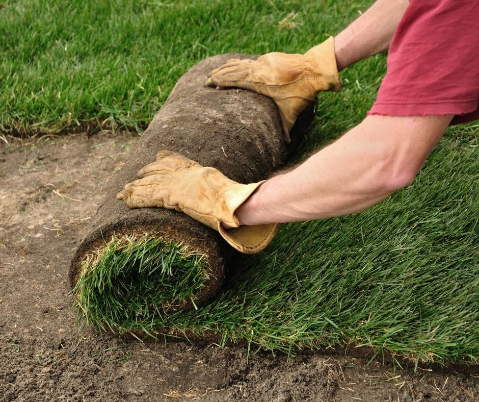 Lawn Care and Sod Services - Greenhouse to Garden